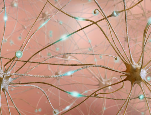 Молекулы радости: как наш мозг создает нейронные связи и формирует привычки и интеллект